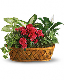 EUROPEAN GARDEN BLOOMING BASKET