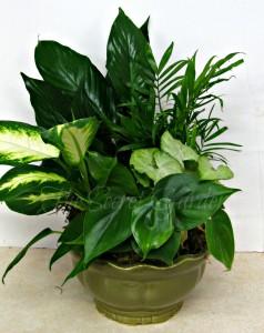 European Garden Ceramic Planter
