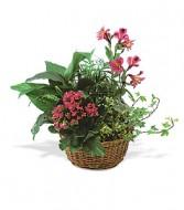 EUROPEAN GARDEN Blooming Basket