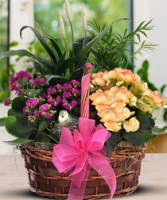 European Garden Plant