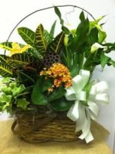 European Garden  Plant basket