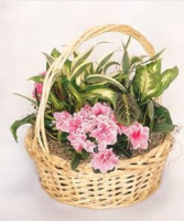 European Garden Plants