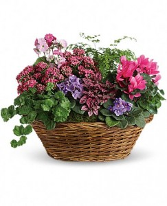 European Plant Basket blooming and green plants in Northport, NY | Hengstenberg's Florist