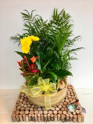 Breitinger's  Plant Dish Garden in Ceramic  in White Oak, PA | Breitinger's Flowers