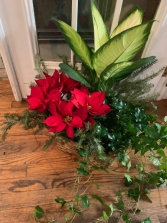 European Poinsettia Basket Garden