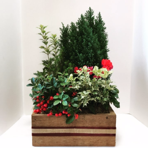 Evergreen Box planter in Northport, NY | Hengstenberg's Florist