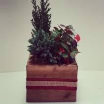 Evergreen Box Planter