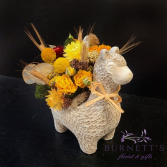 Everlasting Llama Dried Arrangement