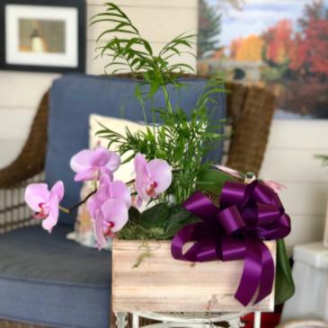 Everlasting Love Blooming Plant Garden