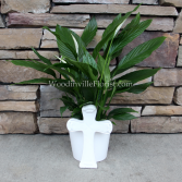Everlasting Peace Peace Lily Plant