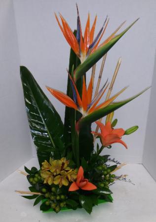 Exotic Birds Cut flowers