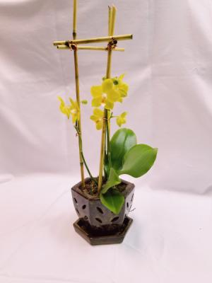 Exotic Breeze Orchid Arrangement  in Sunrise, FL | FLORIST24HRS.COM
