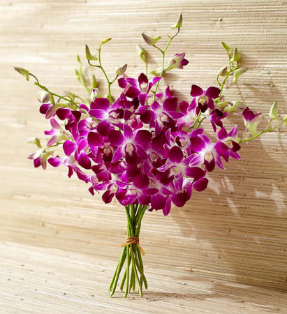 Exotic Breeze Orchids Hand tied bouquet