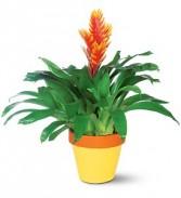 Exotic Bromeliad Plant