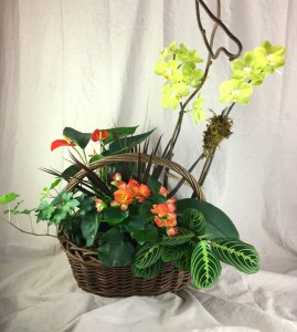Exotic Dish Garden with Phalaenopsis Orchid Plant:  Dish Garden