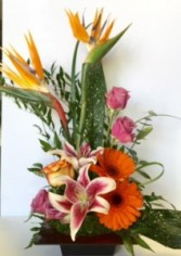 Exotic Gem Modern Exotic Arrangements w/ Birds of Paradise