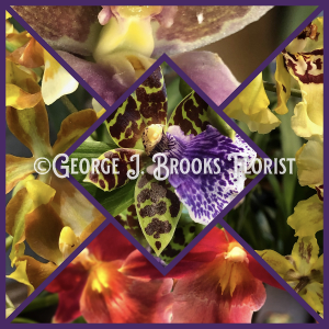 EXOTIC ORCHIDS  in Brattleboro, VT | George J. Brooks Florist LLC