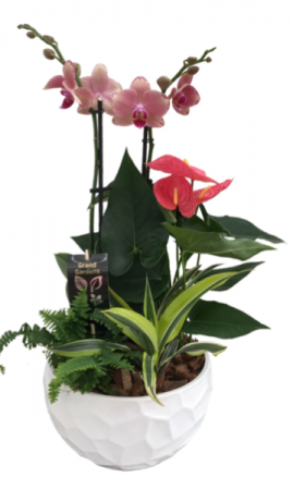 Exotic orchids Dish garden
