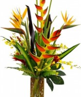 Exotic Tropicals