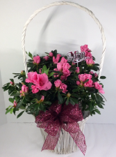 Exquisite Azalea Basket