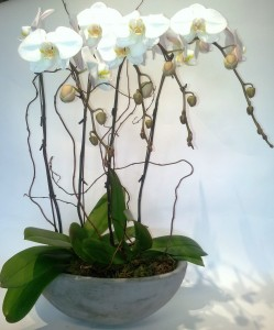 Exquisite Orchid planter