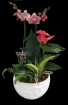 Extra Large Double Orchid Planter