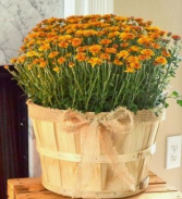 EXTRA Large Mum Plant Basket
