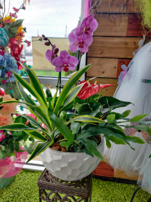 Extra Large Orchid Planter   in Windsor, ON | K. MICHAEL'S FLOWERS & GIFTS
