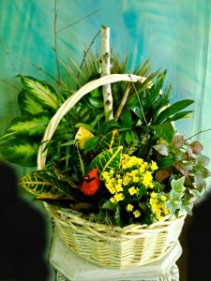 Extra Large Plant Basket with Bird
