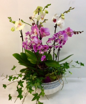 Extra Large Triple Orchid Garden