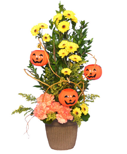 JACK O' LANTERN TREE  Halloween Flowers