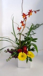 EXOTIC ORHID Arrangement