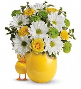 Chickadee  in Stafford, VA | Anita's Beautiful Flowers