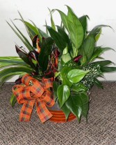 Fabulous Fall Dish Garden  Assorted Plants (local delivery only)
