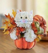 Fabulous Fall Feline In Keepsake Pumpkin