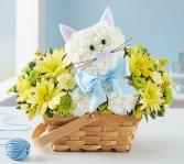 Fabulous Feline™ Boy Arrangement
