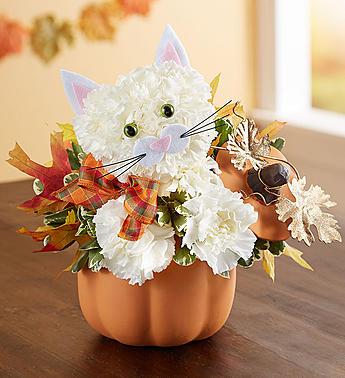 Fabulous Feline™  Fall flowers