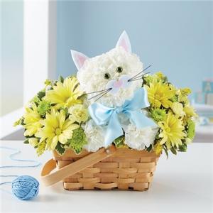 Fabulous Feline For Baby Boy  in Arlington, TX | Erinn's Creations Florist