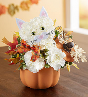 Fabulous Feline™ for Fall *ON SALE*  in Valley City, OH | HILL HAVEN FLORIST & GREENHOUSE