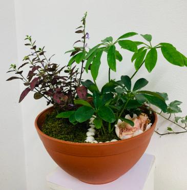 Fairy Garden planter Plant