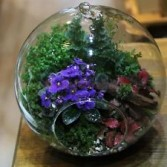 Fairy Garden. Thomaston florist & Greenhouse