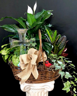Faith plant basket Planter in Chesterfield, MO | ZENGEL FLOWERS AND GIFTS