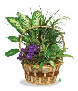 Touch of Violet  Basket Garden
