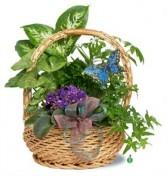 Butterflies in the Garden Plant Basket