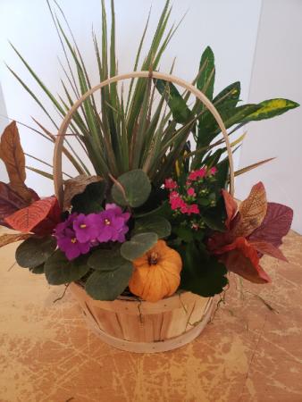 Fall basket of plants