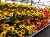FALL CONES $15.99 FALL FLOWERS