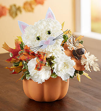 Fall Feline Halloween
