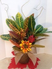 Fall for a Croton Fall plant arrangement