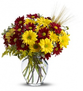Fall For Daisies               TFWEB446 Vase Arrangement