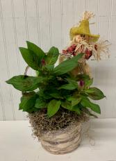 Sweet Celosia Scarecrow
